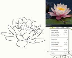 Draw a White Lotus: Drawing the Lotus Flower
