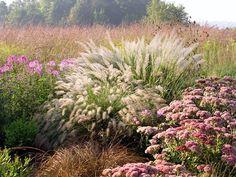 Backdrop of vertical grasses Pennisetum alopecuroides - Calamagrostis brachytricha - Bronze carex, Sedum 'Autumn Joy'