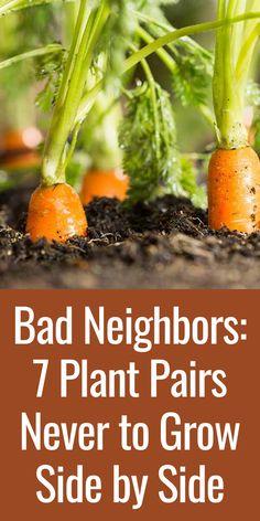 Garden Pests, Garden Care, Vegetable Garden, Veggie Gardens, Tomato Garden, Gardening For Beginners, Gardening Tips, Organic Gardening, Container Gardening