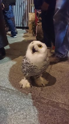 18 Owls You Can't Believe Even Exist