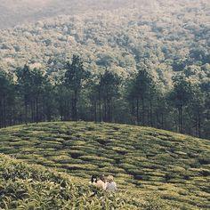 """""""My ladyfriends wandering through tea fields in Kerala."""""""