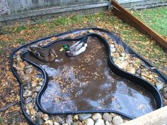 For a pond of this small size, it will need to be emptied and refilled 1 or twice a week. It is not big enough to make a filtration system with beneficial bacteria. Too much duck waste. Backyard Ducks, Backyard Farming, Chickens Backyard, Ponds Backyard, Backyard Birds, Chicken Garden, Backyard Chicken Coops, Diy Chicken Coop, Raising Farm Animals