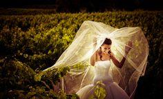 vineyard wedding photo