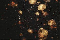 watch jellyfishes