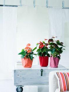 L'Anthurium pour rester zen ! Flamingo Flower, Houseplants, Indoor Plants, Habitats, Planting Flowers, Planter Pots, Tapestry, Info, Touch