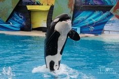 Top 10 Attractions at Sea World San Diego - great family activities