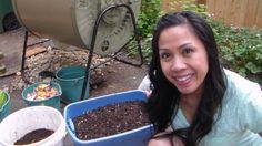 Worm Casting Harvest Over 70 Pounds! Urban Composting, Red Wiggler Worms, Red Wigglers, Worm Castings, Compost Tumbler, Garden Compost, Worm Farm, Wheat Grass