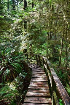 This image was captured on the west Rain Forest Trail in Pacific Rim National Park. The park is on the west coast of Vancouver Island in British Columbia, Canada. The photograph was taken in May of 2014.