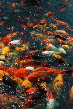 Fish.. fish everywhere