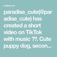 paradise_cute( has created a short video on TikTok with music 原聲. Cute puppy dog, second wave of dog food, did you count, kiss a few times?😘😘😘😘😘I wish that all lovers will be married! Cute Little Animals, Little Pets, Funny Animal Pictures, Funny Animals, S Letter Images, Cute Girl Hd Wallpaper, Ganesh Photo, Cute Love Gif, Cute Dogs And Puppies