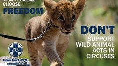Depart. of Environmental Affairs and Depts. of Provincial Conservation: End the use of wild animals in circuses