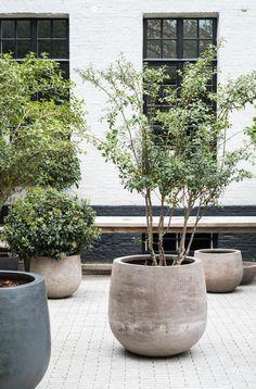 Adorable 41 Cozy Built In Planter Design Ideas To Upgrade Your Outdoor Space Outdoor Pots, Outdoor Gardens, Indoor Outdoor Rugs, Outdoor Spaces, Terrace Garden, Garden Pots, Large Planters, Deck Planters, Diy Concrete Planters