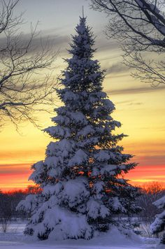 The winter landscape in 80 beautiful pictures!fr - Helde - - Le paysage d'hiver en 80 images magnifiques! Winter Szenen, I Love Winter, Winter Sunset, Winter Magic, Winter Christmas, Winter Time, Merry Christmas, Good Morning Winter, Magic Snow