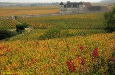 THE WINE ROUTE (Route des Grands crus) - Dijon to Santenay