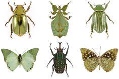 green bugs, so pretty
