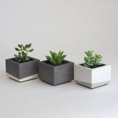 Set of Three Concrete Succulent Planters, Classic Colors, Vertical Lines Handmade concrete planters for succulents and cacti. Concrete Pots, Concrete Crafts, Concrete Design, Concrete Planters, Planter Pots, Cacti And Succulents, Planting Succulents, Planting Flowers, Succulent Planters