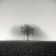 Photography, Medium format in Nature, Vegetal, Tree, forest, Hasselblad, digital back - Image #557708