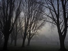 Cyclists in the fog by zwedendejong