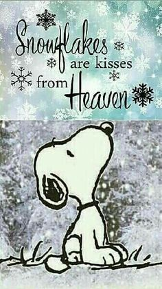 Snoopy - Snowflakes are kisses from heaven Peanuts Quotes, Snoopy Quotes, Me Quotes, Funny Quotes, Funny Memes, Snoopy Love, Charlie Brown And Snoopy, Snoopy And Woodstock, Charlie Brown Quotes