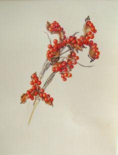 Iris seedhead watercolor by Irish botanical artist Shevaun Doherty