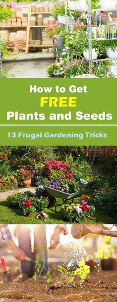 Find out how to get free plants and seeds for your garden in these 13 frugal gardening tricks. This way you can save plenty of money.