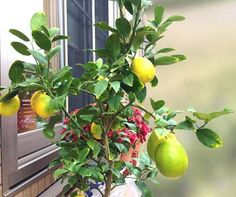 Kitchen Plants, Plantar, Green Garden, Green Flowers, Growing Vegetables, Fall Crafts, House Plants, Flora, Simple