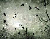 Celestial Birds via gothicrow