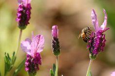bee nice by Karol Franks, via Flickr