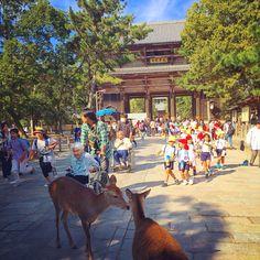 Deer in Nara! Nara, Kangaroo, Deer, Travelling, Journey, Animals, Baby Bjorn, Animales, Animaux