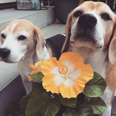 Yup we dug up everything but this flower, and we picked it for you!