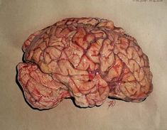 My realistic brain drawing realized with premier pencils Brain Drawing, Ap Drawing, Art Alevel, Medical Art, Ap Art, Prismacolor, New Pictures, Colored Pencils, Drawings