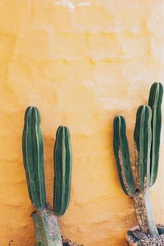 Yellow tinted southwest walls. Plus Cactus. Always Cactus.
