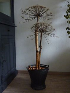 kitchen ideas – New Ideas Modern Rustic Decor, Modern Rustic Interiors, Beautiful Interiors, Rustic Style, Manzanita Beach, Carrot Flowers, Vase Deco, The Best Is Yet To Come, Next At Home
