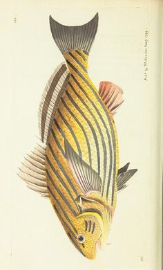 v.10 - The naturalist's miscellany, or Coloured figures of natural objects - Biodiversity Heritage Library