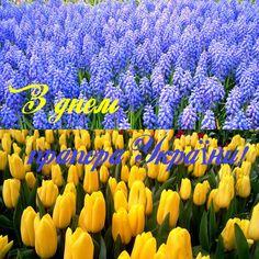 Зі святом вас любі! Нехай символ України - Державний прапор - осяює наш шлях та надихає до нових успіхів у добрих справах задля розвитку України! http://yaskravaklumba.com.ua/ua