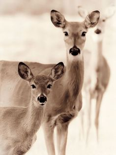 These faces look familiar!  HA!  Deer roam our neighborhood and this is how they look at us!  LOL!