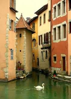 Swan on the canals of Annecy, France