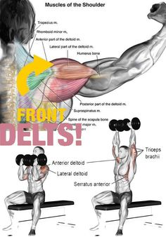 Weight Training Workouts, Gym Workout Tips, Fun Workouts, Fitness Gym, Muscle Fitness, Fitness Motivation, Deltoid Workout, Dumbbell Workout, Fitness Bodybuilding