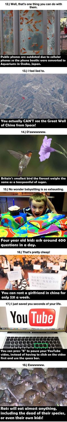 Mind-Blowing Things You Didn't Know Before Today  // funny pictures - funny photos - funny images - funny pics - funny quotes - #lol #humor #funnypictures