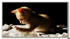 Mmm... y ésto qué es??   Flickr – Compartilhamento de fotos!