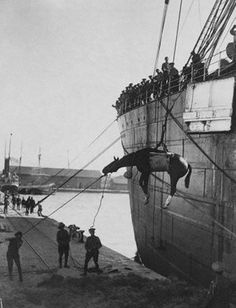 One of the millions of horses used during the course of the war is winched ashore at Thessaloniki, Greece.