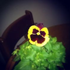 So proud of this little flower :)
