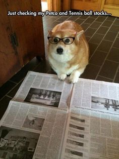 Funny pictures about Financial Analyst Corgi. Oh, and cool pics about Financial Analyst Corgi. Also, Financial Analyst Corgi photos. Cute Funny Animals, Funny Animal Pictures, Funny Cute, Funny Dogs, Animal Pics, Funny Photos, Hilarious, Cute Puppies, Cute Dogs