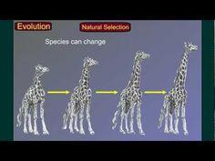 Evolution Part 3: Speciation - YouTube