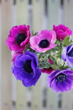 Anenomes - II will always associate these with Ruth's wedding. I'd love some in my garden to remind me :)