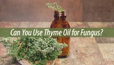 If left untreated, your toenail fungus can get much worse. Many people swear by thyme oil for fungus. Here is how you can use it yourself: