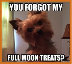 Don't forget the #FullMoonPet treats!