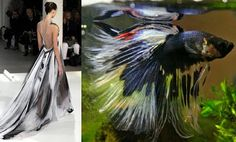 Rodarte's Siamese Fighting Fish ~ Trend de la Creme - Trends in fashion, style, beauty, design, and popular culture.