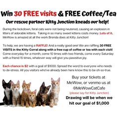Want to get 30 FREE visits to the Kitty Corral with FREE coffee or tea? Help us help our rescue partner @KittyJunction #cat #cats #kitten #adoptacat #adoptdontshop #catadoption #catrescue #rescuecat #catlove #fortheloveofcats #lifewithcats #catsarethebest #kitty #kittens #cutecat #doylestown #instacats #catloversclub #bestmeow #meow #rescuecatsrock #rescuedismyfavoritebreed #furbaby #rescuekitten #fostercat #catcafe #catsandcoffee Instagram News, Foster Cat, Kitten Rescue, Cat Cafe, Feral Cats, Kittens Cutest, Fur Babies, Cat Lovers, Kitty