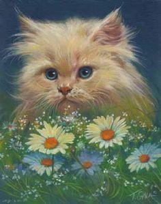 Kitten Daisies, Thomas Galasinski